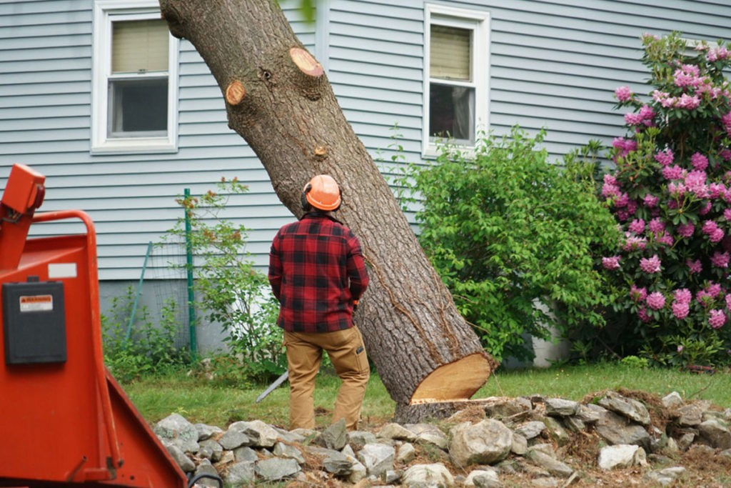 24/7 Tree Removal - Wellington's Best Tree Trimming and Tree Removal  Services