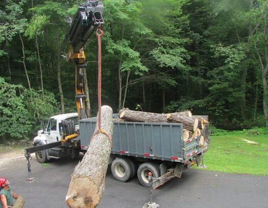 Commercial Tree Services-Wellington's Best Tree Trimming and Tree Removal Services-We Offer Tree Trimming Services, Tree Removal, Tree Pruning, Tree Cutting, Residential and Commercial Tree Trimming Services, Storm Damage, Emergency Tree Removal, Land Clearing, Tree Companies, Tree Care Service, Stump Grinding, and we're the Best Tree Trimming Company Near You Guaranteed!
