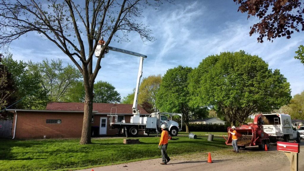Contact Us-Wellington's Best Tree Trimming and Tree Removal Services-We Offer Tree Trimming Services, Tree Removal, Tree Pruning, Tree Cutting, Residential and Commercial Tree Trimming Services, Storm Damage, Emergency Tree Removal, Land Clearing, Tree Companies, Tree Care Service, Stump Grinding, and we're the Best Tree Trimming Company Near You Guaranteed!