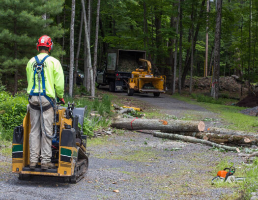 Emergency Tree Removal-Wellington's Best Tree Trimming and Tree Removal Services-We Offer Tree Trimming Services, Tree Removal, Tree Pruning, Tree Cutting, Residential and Commercial Tree Trimming Services, Storm Damage, Emergency Tree Removal, Land Clearing, Tree Companies, Tree Care Service, Stump Grinding, and we're the Best Tree Trimming Company Near You Guaranteed!