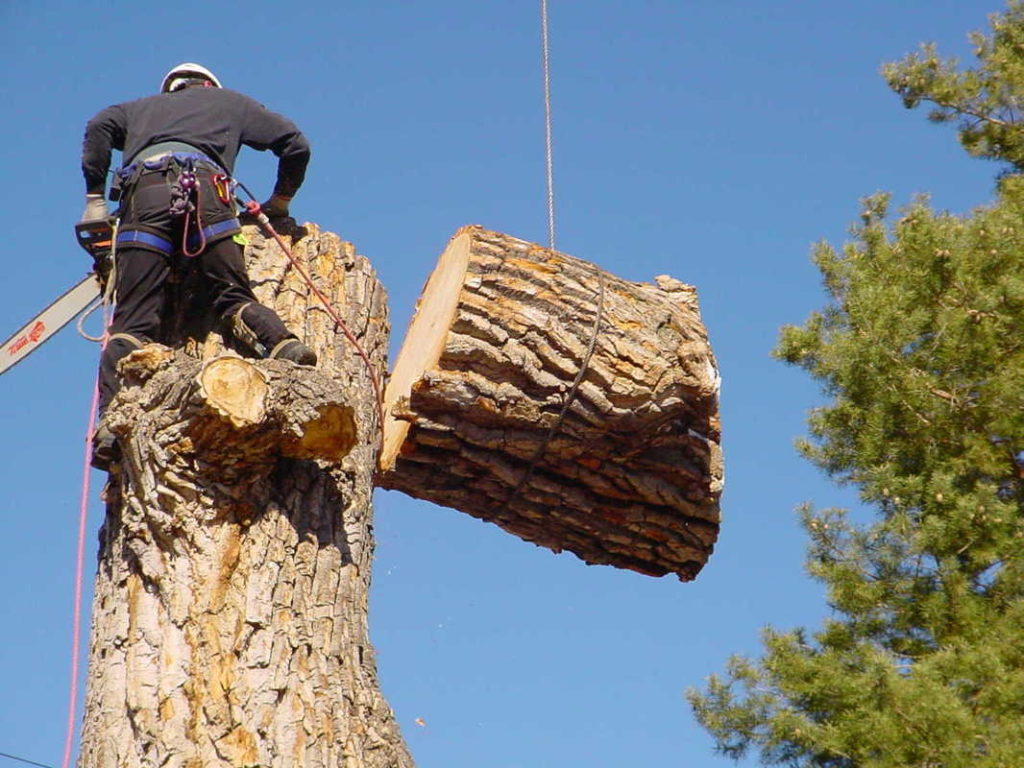 Greenacres-Wellington's Best Tree Trimming and Tree Removal Services-We Offer Tree Trimming Services, Tree Removal, Tree Pruning, Tree Cutting, Residential and Commercial Tree Trimming Services, Storm Damage, Emergency Tree Removal, Land Clearing, Tree Companies, Tree Care Service, Stump Grinding, and we're the Best Tree Trimming Company Near You Guaranteed!