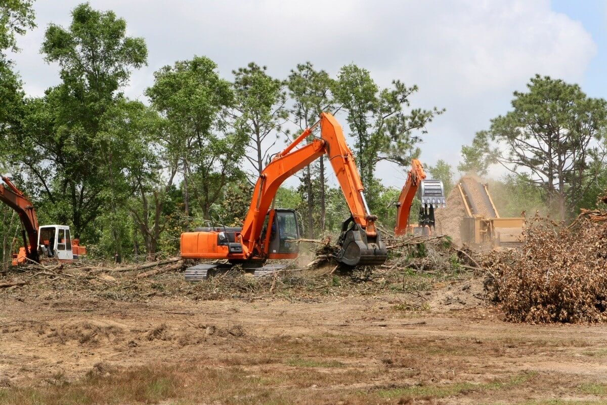 Land Clearing-Wellington's Best Tree Trimming and Tree Removal Services-We Offer Tree Trimming Services, Tree Removal, Tree Pruning, Tree Cutting, Residential and Commercial Tree Trimming Services, Storm Damage, Emergency Tree Removal, Land Clearing, Tree Companies, Tree Care Service, Stump Grinding, and we're the Best Tree Trimming Company Near You Guaranteed!