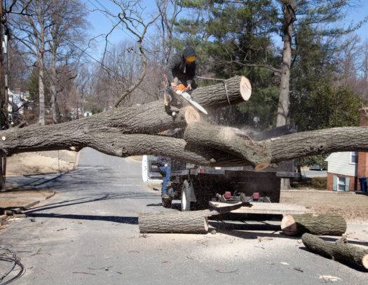 Residential Tree Services-Wellington's Best Tree Trimming and Tree Removal Services-We Offer Tree Trimming Services, Tree Removal, Tree Pruning, Tree Cutting, Residential and Commercial Tree Trimming Services, Storm Damage, Emergency Tree Removal, Land Clearing, Tree Companies, Tree Care Service, Stump Grinding, and we're the Best Tree Trimming Company Near You Guaranteed!