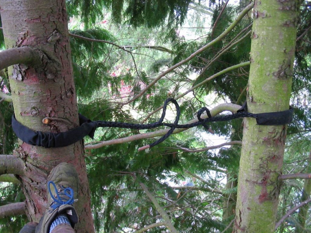 Tree Bracing & Cabling-Wellington's Best Tree Trimming and Tree Removal Services-We Offer Tree Trimming Services, Tree Removal, Tree Pruning, Tree Cutting, Residential and Commercial Tree Trimming Services, Storm Damage, Emergency Tree Removal, Land Clearing, Tree Companies, Tree Care Service, Stump Grinding, and we're the Best Tree Trimming Company Near You Guaranteed!