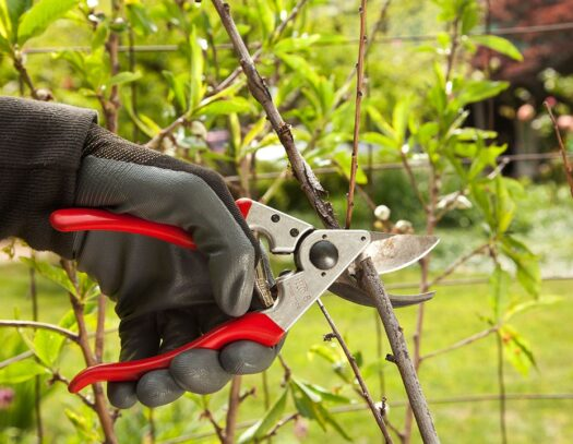 Tree Pruning-Wellington's Best Tree Trimming and Tree Removal Services-We Offer Tree Trimming Services, Tree Removal, Tree Pruning, Tree Cutting, Residential and Commercial Tree Trimming Services, Storm Damage, Emergency Tree Removal, Land Clearing, Tree Companies, Tree Care Service, Stump Grinding, and we're the Best Tree Trimming Company Near You Guaranteed!
