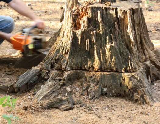 Tree Stump Removal-Wellington's Best Tree Trimming and Tree Removal Services-We Offer Tree Trimming Services, Tree Removal, Tree Pruning, Tree Cutting, Residential and Commercial Tree Trimming Services, Storm Damage, Emergency Tree Removal, Land Clearing, Tree Companies, Tree Care Service, Stump Grinding, and we're the Best Tree Trimming Company Near You Guaranteed!