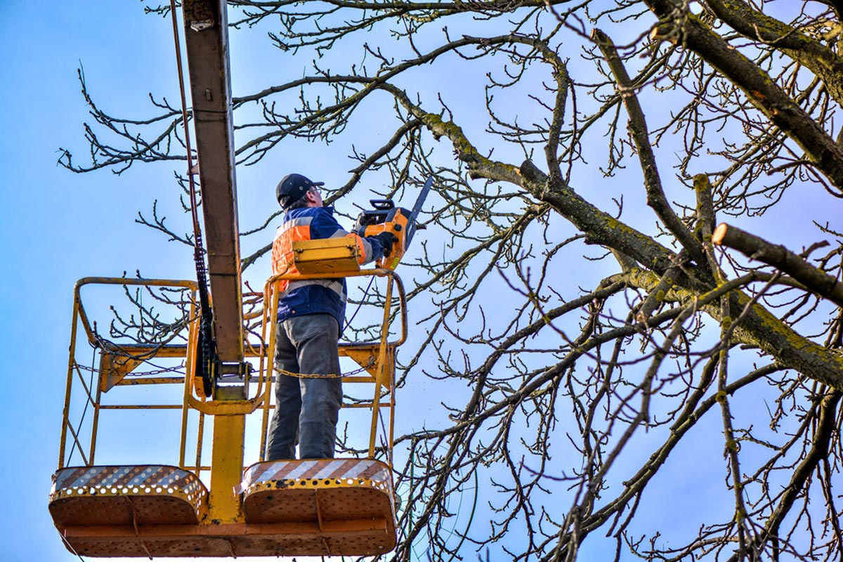 Tree Trimming-Wellington's Best Tree Trimming and Tree Removal Services-We Offer Tree Trimming Services, Tree Removal, Tree Pruning, Tree Cutting, Residential and Commercial Tree Trimming Services, Storm Damage, Emergency Tree Removal, Land Clearing, Tree Companies, Tree Care Service, Stump Grinding, and we're the Best Tree Trimming Company Near You Guaranteed!